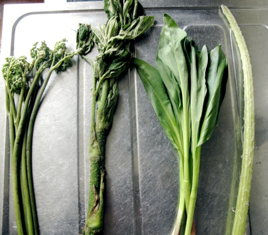 Japanese mountain vegetables