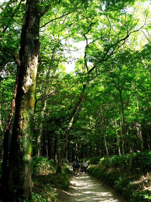 Kamikochi trail