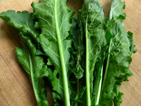 Arugula for tatsoi